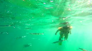Magnetic Island - Snorkeling Adventure and Koalas in the wild