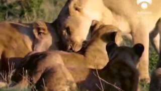 DOCUMENTAL.   Homosexualidad en el reino animal.   3 de 6