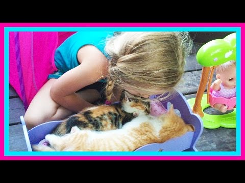 Ba Kitten Sleepover on The Pirate Ship Playground Park for Kids W Play Doh Girl & Fun Factory