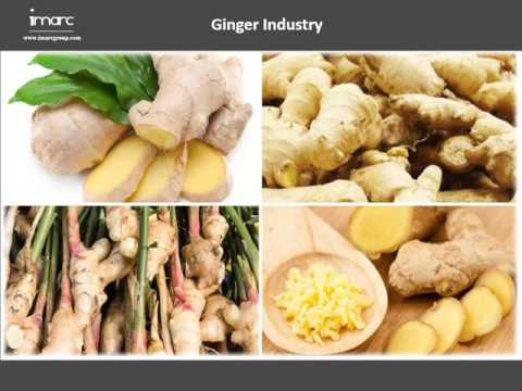 Ginger : Market Analysis, Growth & Manufacturing Plant Report