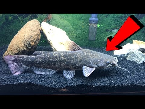 Fishing For A Pet CATFISH! (Name My Fish!)