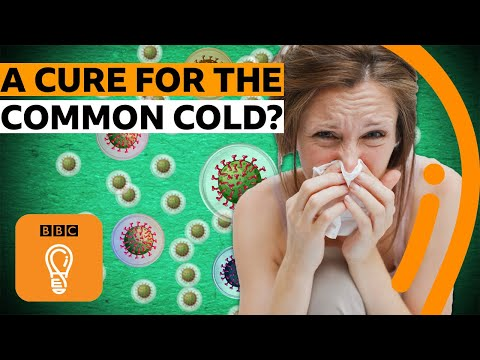 The Real Reason There's No Cure For Your Cold | BBC Ideas