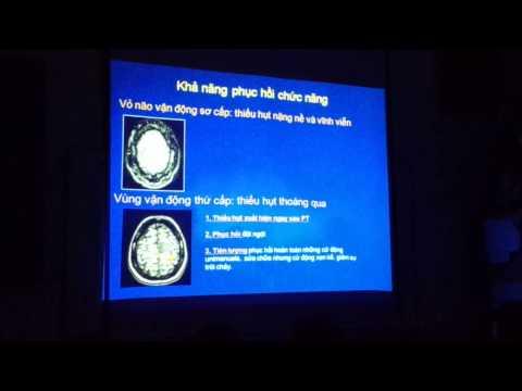[BÀI GIẢNG] Giải phẫu vỏ não trên CT-Scanner và MRI