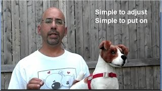 How To Fit And Adjust Your Walk Your Dog With Love Dog Harness 2015 Model