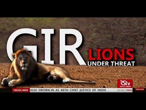 In Depth: Gir Lions Under Threat