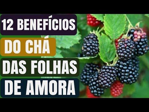 12 Benefícios do chá das folhas de Amora! | Naturalmente Saudável.