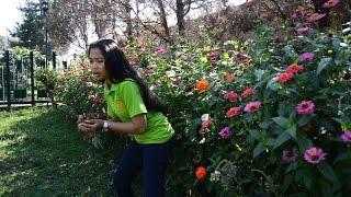 Cara Unik Menanam Bunga Zinnia