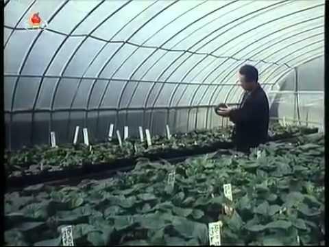 North Korean TV Documentary on KimJongIlia Flower 1 2