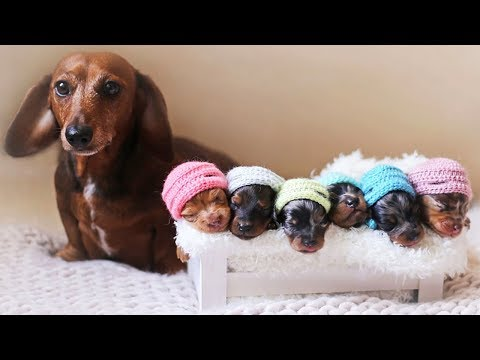 Cute is Not Enough - Funny Cats and Dogs Compilation #67