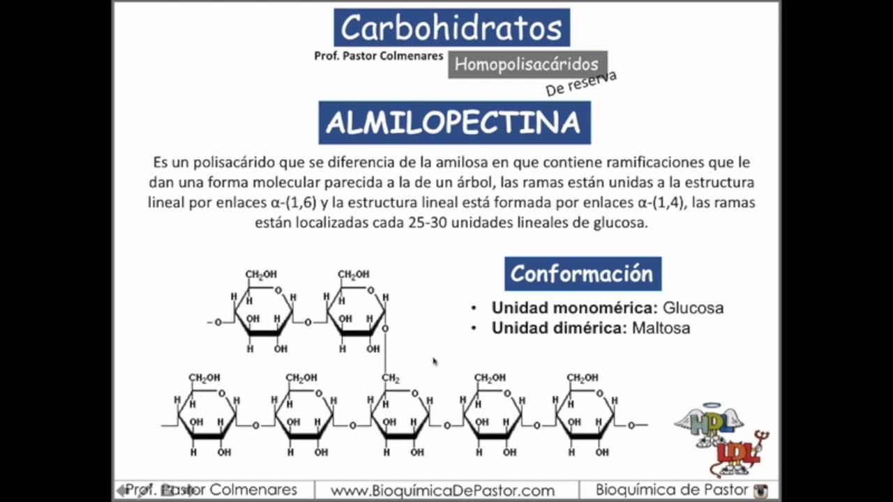 Almidón Y Glucógeno Carbohidratos Parte Xi