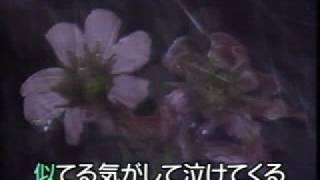 雨酒場 香西かおり Amesakaba Kouzai Kaori.