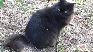 Видео про чёрных котов Серые полосатые коты