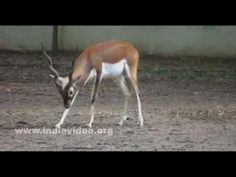 Jawaharlal Nehru Biological Park, Bokaro, Jharkhand