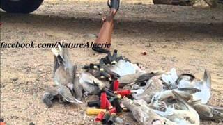 جرائم الخليج في طبيعة صحراء شمال افريقيا الجزائر وليبيا وموريتانيا