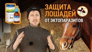 Защита лошадей от эктопаразитов