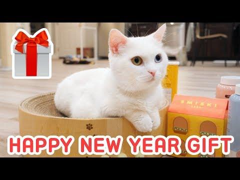 고양이가 새해 선물을 받았어요! 새로운 최애템!