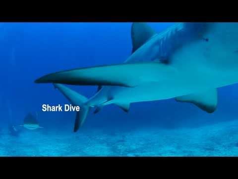 Ocean Explorers Dive Center - Shark Dive