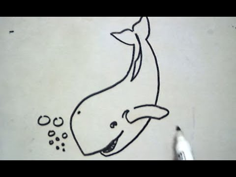 Cara Menggambar Ikan Paus How To Draw A Whale Youtube