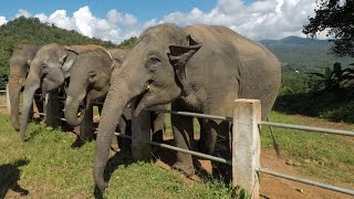 THAILAND TRAVEL VLOG | Chiang Mai Adventures ♥