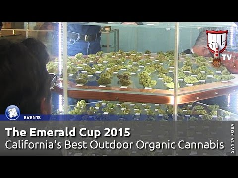 Emerald Cup 2015 - California's Best Outdoor Organic Cannabis - Smokers Guide TV California