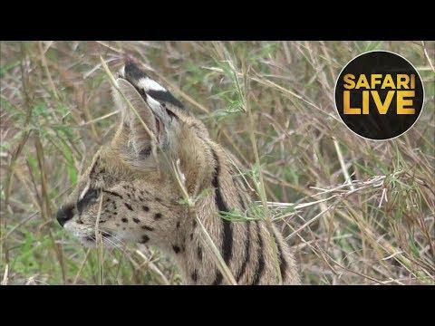 2:04:41 safariLIVE - Sunset Safari - October 24, 2018
