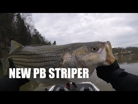 awesome-battle-with-15-pound-smith-mountain-lake-striper
