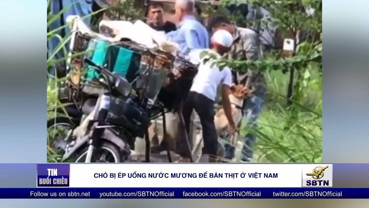 Chó bị ép uống nước mương để bán thịt ở Việt Nam