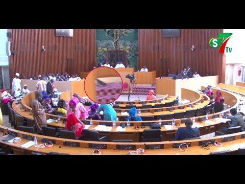 Insolite - Assemblée Nationale : Deux Chats Interrompent La Séance Pléniaire