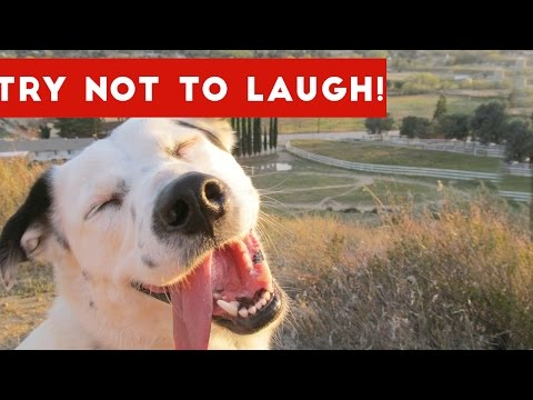 Thumbnail: Try Not To Laugh Or Grin At These Funny Animal Clips, Bloopers & Outtakes | Funny Pet Videos