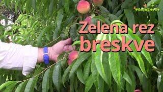 Repeat youtube video Zelena rez breskve