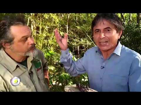 Domingo Espetacular mostra novos ataques de escorpiões no Brasil