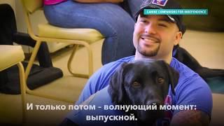 Как в США дрессируют собак-помощников для людей с ограниченными возможностями