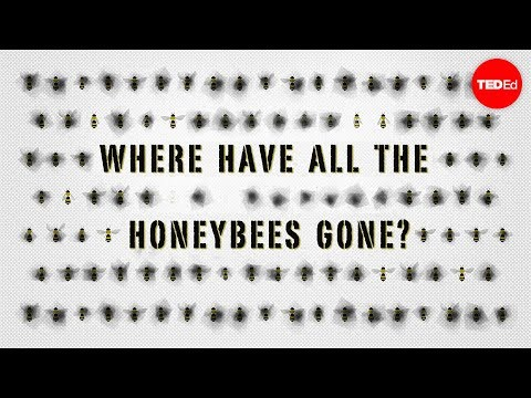 The case of the vanishing honeybees - Emma Bryce