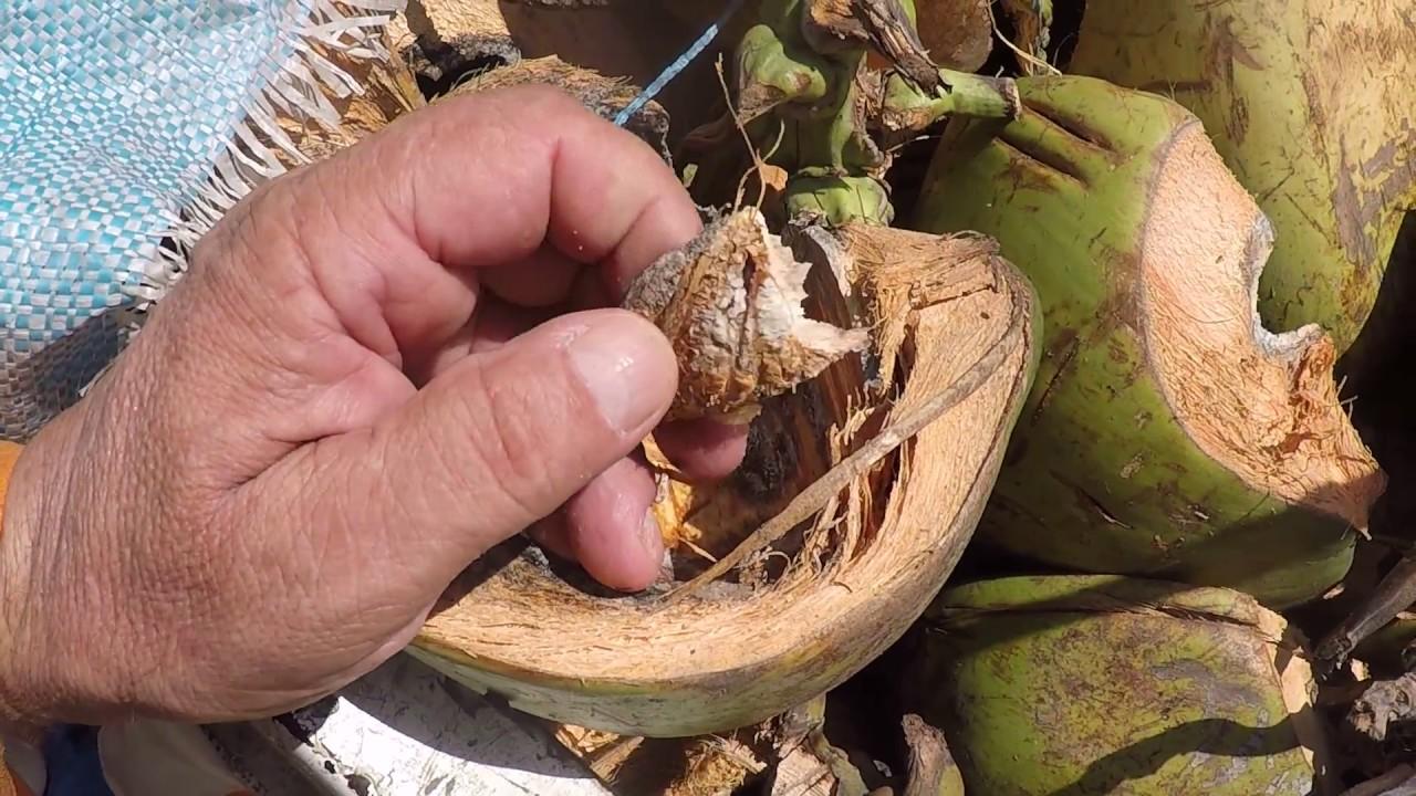 Palm Tree Wood Uses