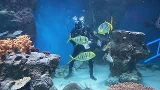 В дельфинарии решили накормить рыб и акул блинами из кальмаров