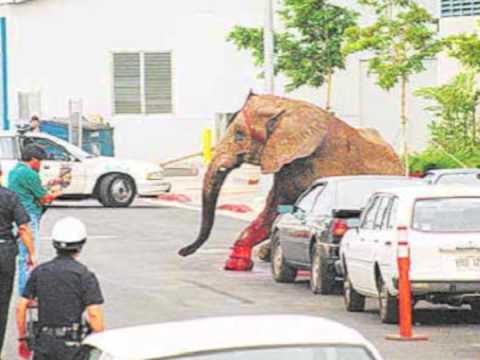 TYKE elephant