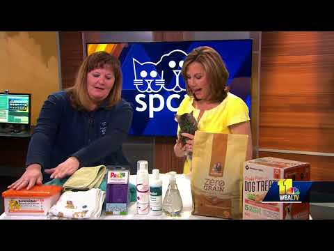 SPCA talks about protections your pet from allergies