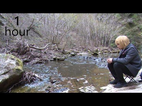 【鬼龍院】癒し&安眠のための川のせせらぎ動画1時間