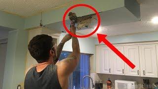 Este hombre estaba cortando el techo de su cocina cuando de pronto hace un descubrimiento fascinante