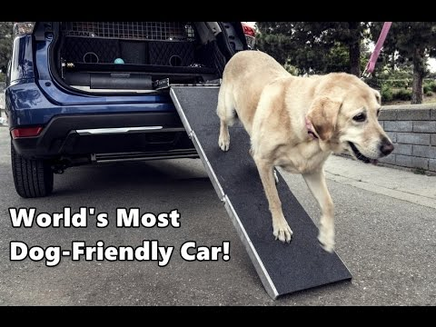 world 39 s most dog friendly car nissan rogue dogue youtube. Black Bedroom Furniture Sets. Home Design Ideas