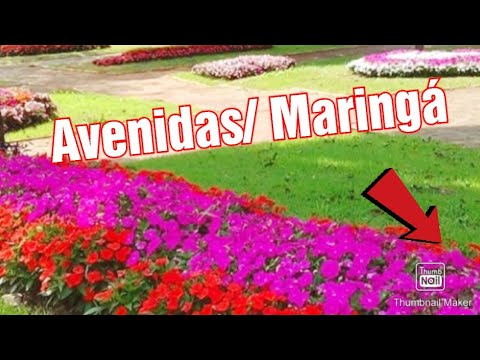 Maringá encantada, tour pelas avenidas.