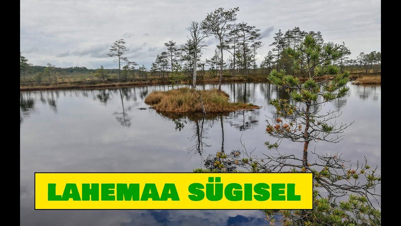Early Autumn in Lahemaa National Park / Lahemaa rahvuspark varasügisel - Estonian Nature