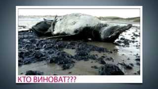 Экология земли(Экология. Видео про экологию, О том, что надо спасать нашу землю, Экология земли, наша земля в опасности., 2015-11-28T19:43:10.000Z)