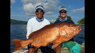 World's Biggest Pacific and Atlantic Snapper Cubera