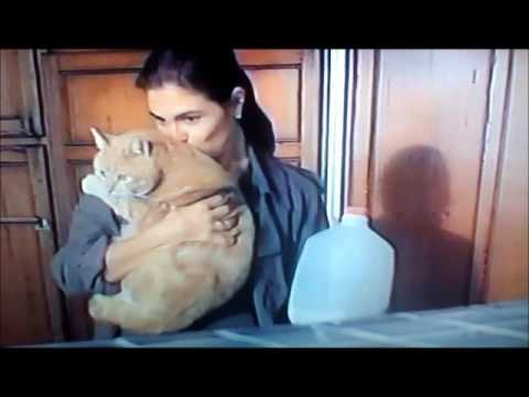 paige turco  its just you and me cat