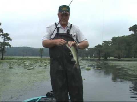 Weekly Caddo Lake Fishing Report Caddo Lake Fishing