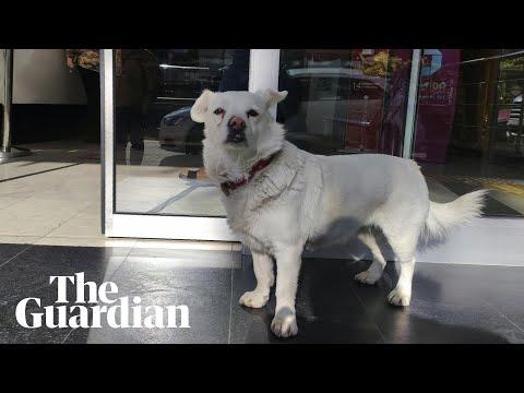 How Boncuk the dog waited days outside Turkish hospital
