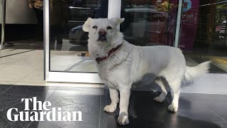 How Boncuk the dog waited days outside Turkish hospital
