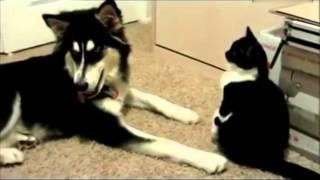 #搞笑动物!猫咪和狗狗爆笑打架  频道:人与自然 动物趣事 在线观看 PPS爱频道 thumbnail
