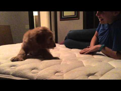 Meets puppy for the first time video